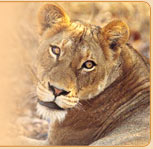 http://www.maharashtratourism.net/images/wild-safaris.jpg